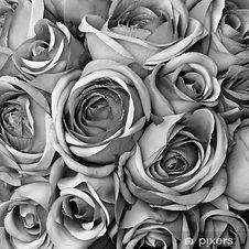 poster-sfondo-con-rose-in-bianco-e-nero.