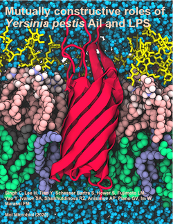 """""""Molecular Microbiology"""" journal cover, May 2020"""