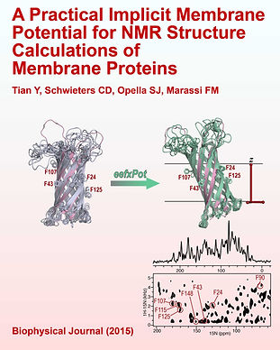 """Biophyisical Journal"" cover; high-quality NMR structures of proteins in an implicit membrane environment"
