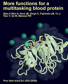 """PNAS"" journal cover; blood protein vitronectin binds calcium"