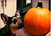 Dog Pumpkin_edited.png