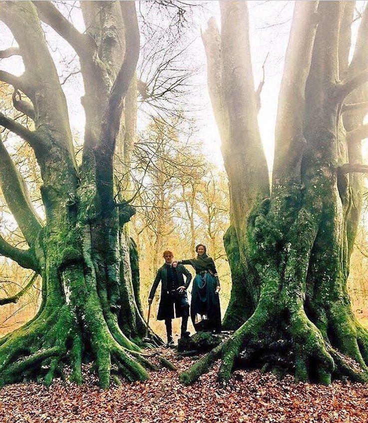 """Fraser's Ridge """"witness trees"""""""