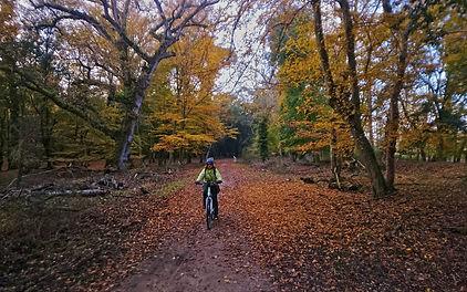 ebike in autumn.jpg