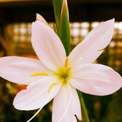 Close up of pretty white flower.jpg