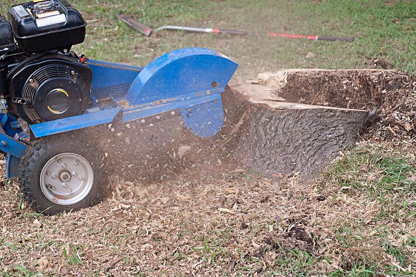 Blue Stump Grinder in Action