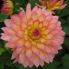 Close up of pretty pink flower.jpg
