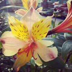 Colourful Flower.jpg