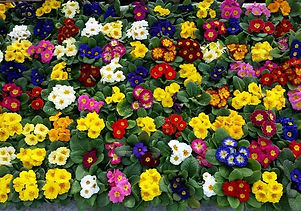 Aerial View of Flowers