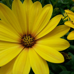 Close up of yellow flower.jpg