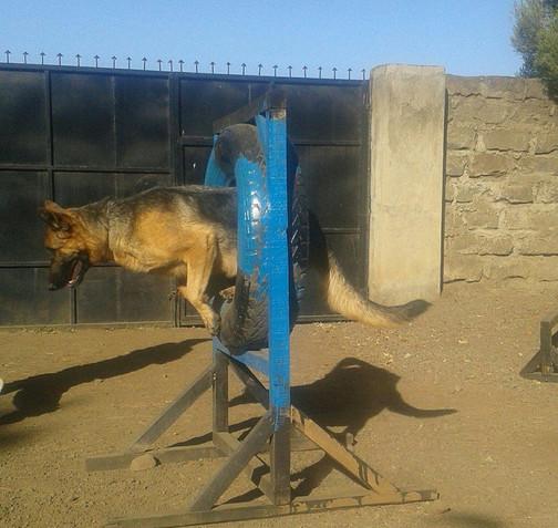 big dog jump.jpg