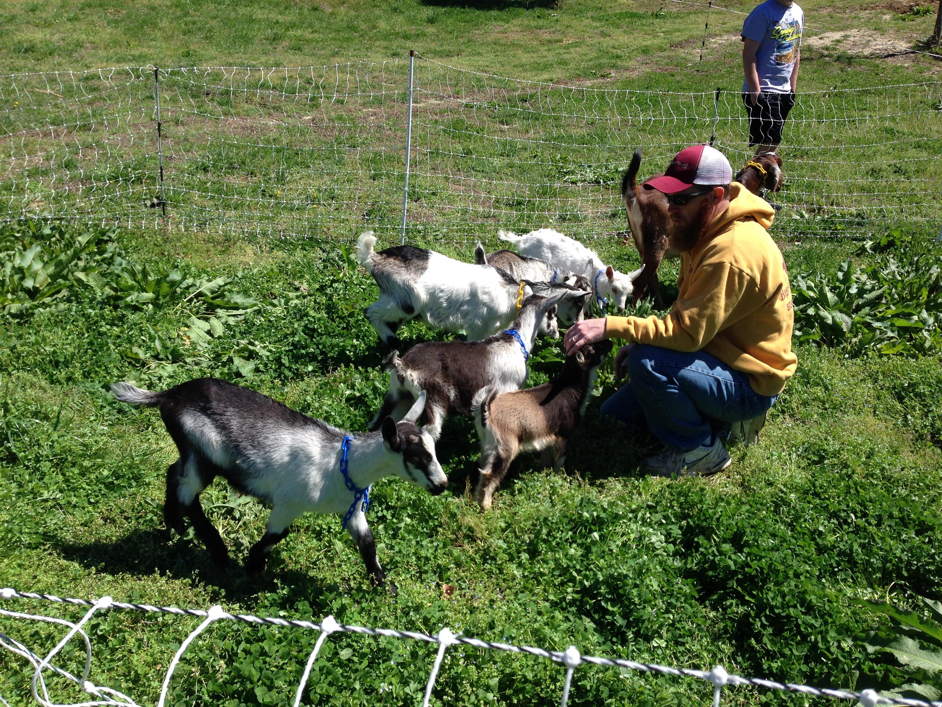 pastured goats