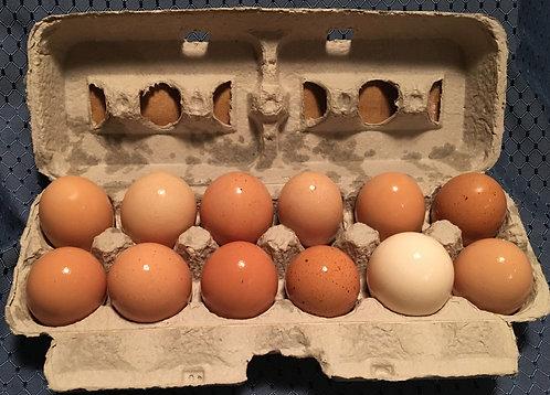 Pastured, Free-Range Eggs
