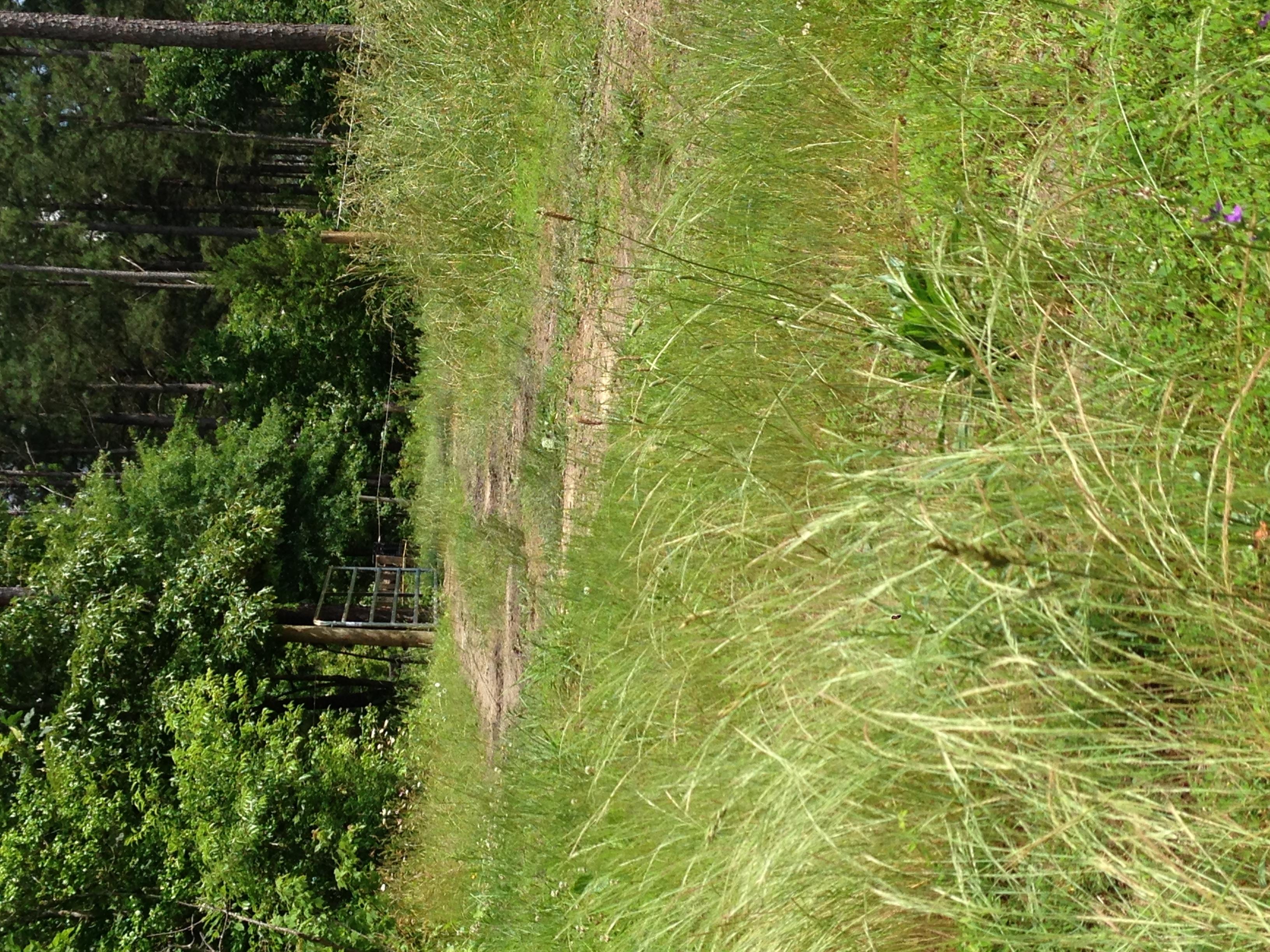 pasture road