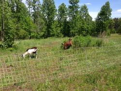 buck paddock