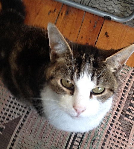 Pabs cat - Kay Widdowson