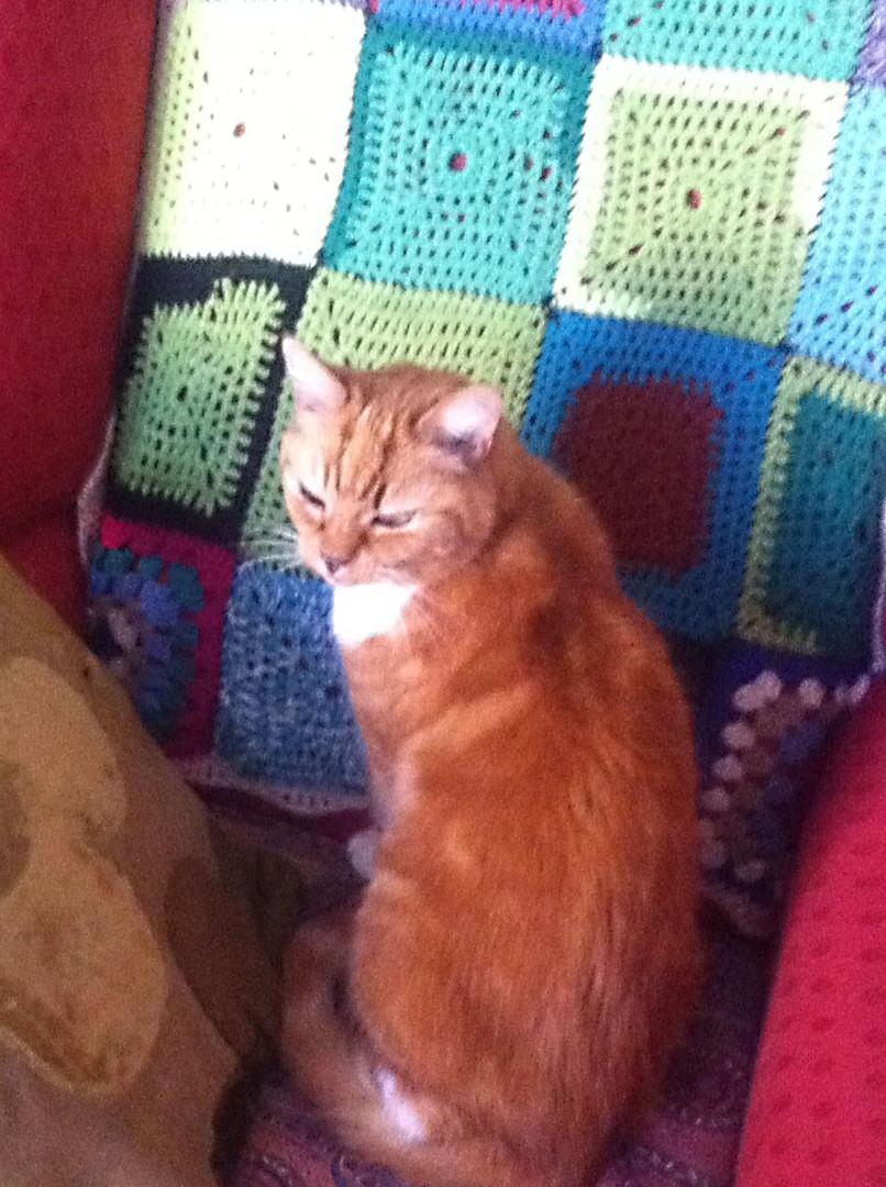 Tiger cat - Kay Widdowson