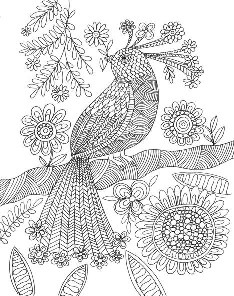 Exotic Bird- Kay Widdowson