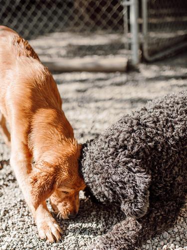 Dog playing.jpg