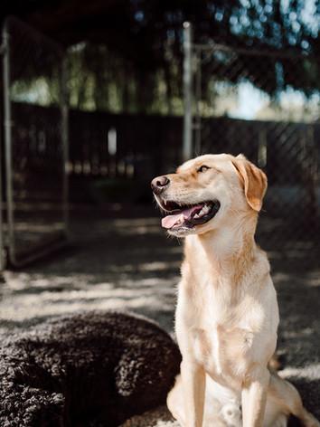 smile dog.jpg