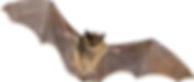 iso bat_edited.png