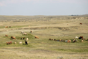 The Holy Grail for Cattle Management