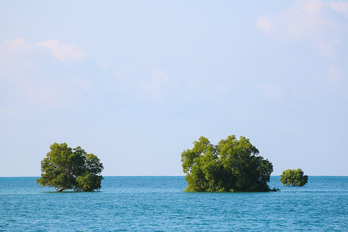 Sea you trees