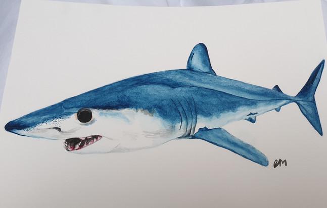 Mako Shark