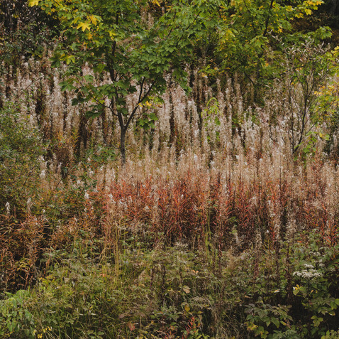 Autumn Ecrins