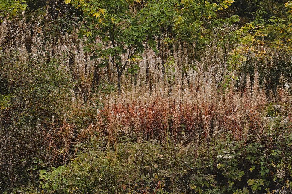 Autumn Ecrins.jpg