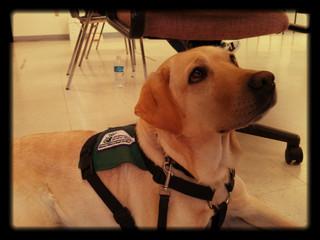 Service Dogs: 101
