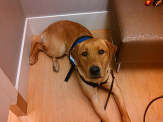 Service Dogs: Asking the Important Questions