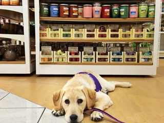 Service Dogs: Business Owners and Employees