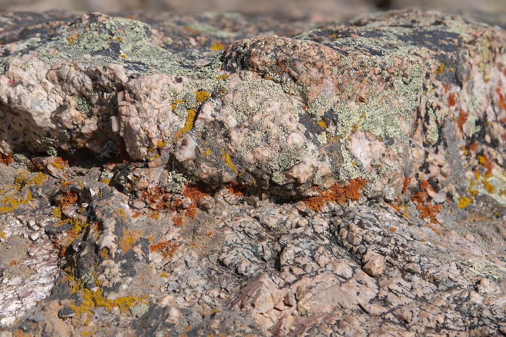 Lichen on rocks, Wyoming