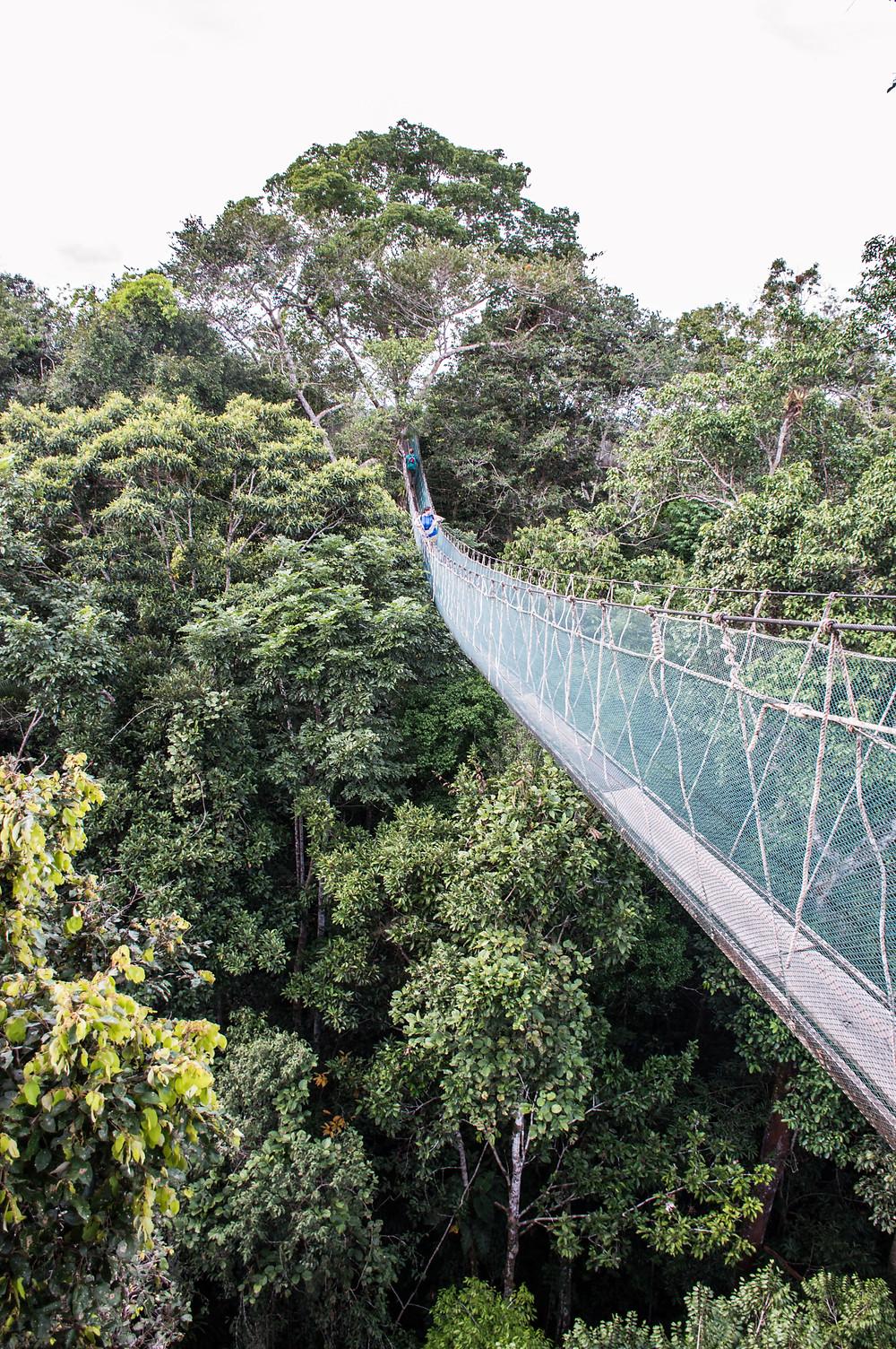 Rainforest canopy walk