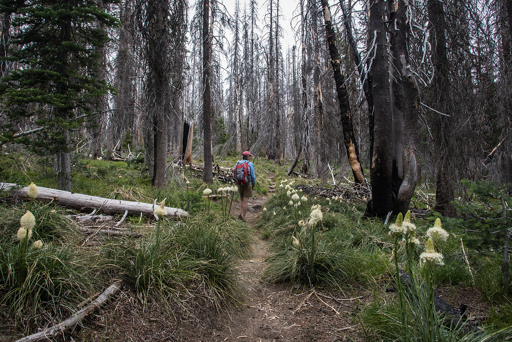 Jonathan on Shorthorn Trail, through burn