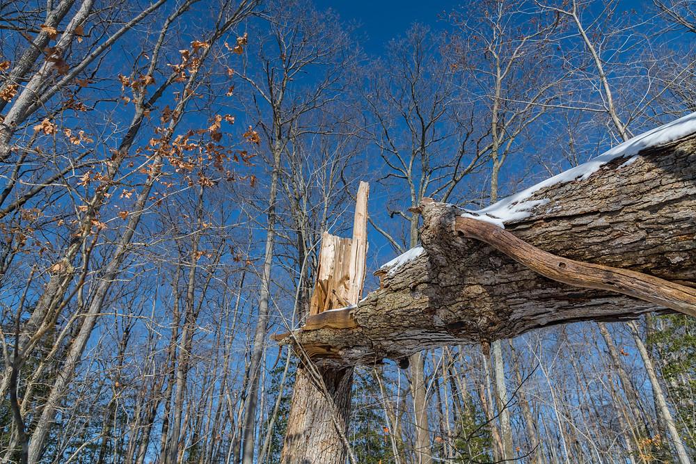Broken tree, blue sky, woods.