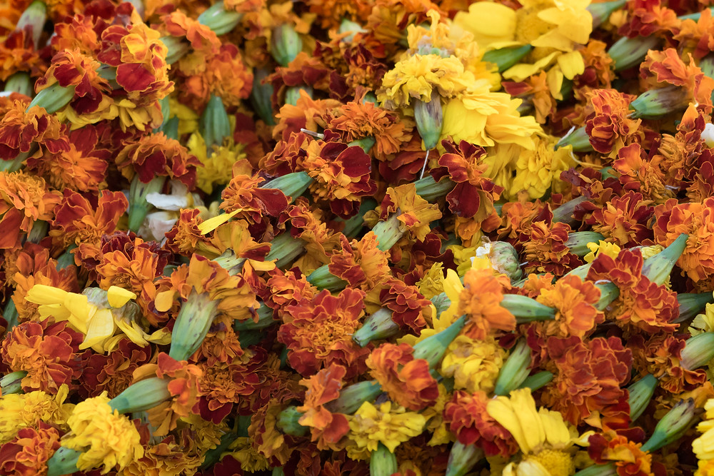 Marigolds for blessings, River Ganges, Varanasi, India