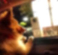puppy-e1424848713644.jpg