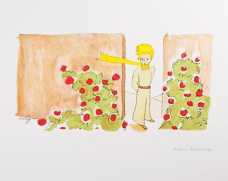 Le Petit Prince dans le jardin des roses (The Little Prince in The Garden)