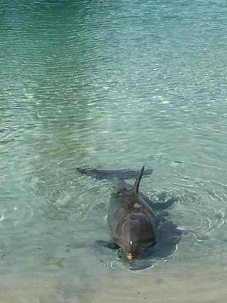 My Wonderful Sea Life Experience