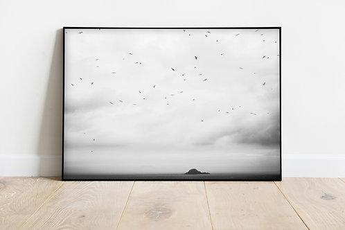 Pássaros I