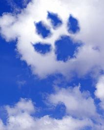 emotivas-cartas-de-amor-para-tu-perro-fa