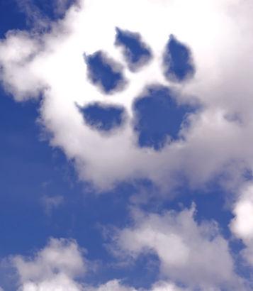 emotivas-cartas-de-amor-para-tu-perro-fallecido-descansa-en-paz-amigo-lg_edited_edited.jpg
