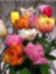 IMG_2010_edited.jpg