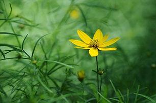 painful-intercourse-flower.jpg