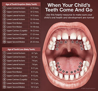 Lewood Dental when do kid's teeth come in