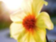 pelvic-pain-flower.jpg