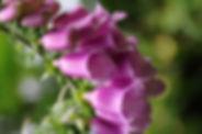 bowel-dysfunction-flower.jpg