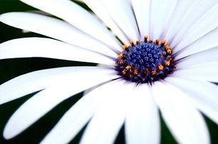 pediatric-pelvic-dysfunction-flower.jpg