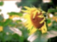 urinary-dysfunction-flower.jpg